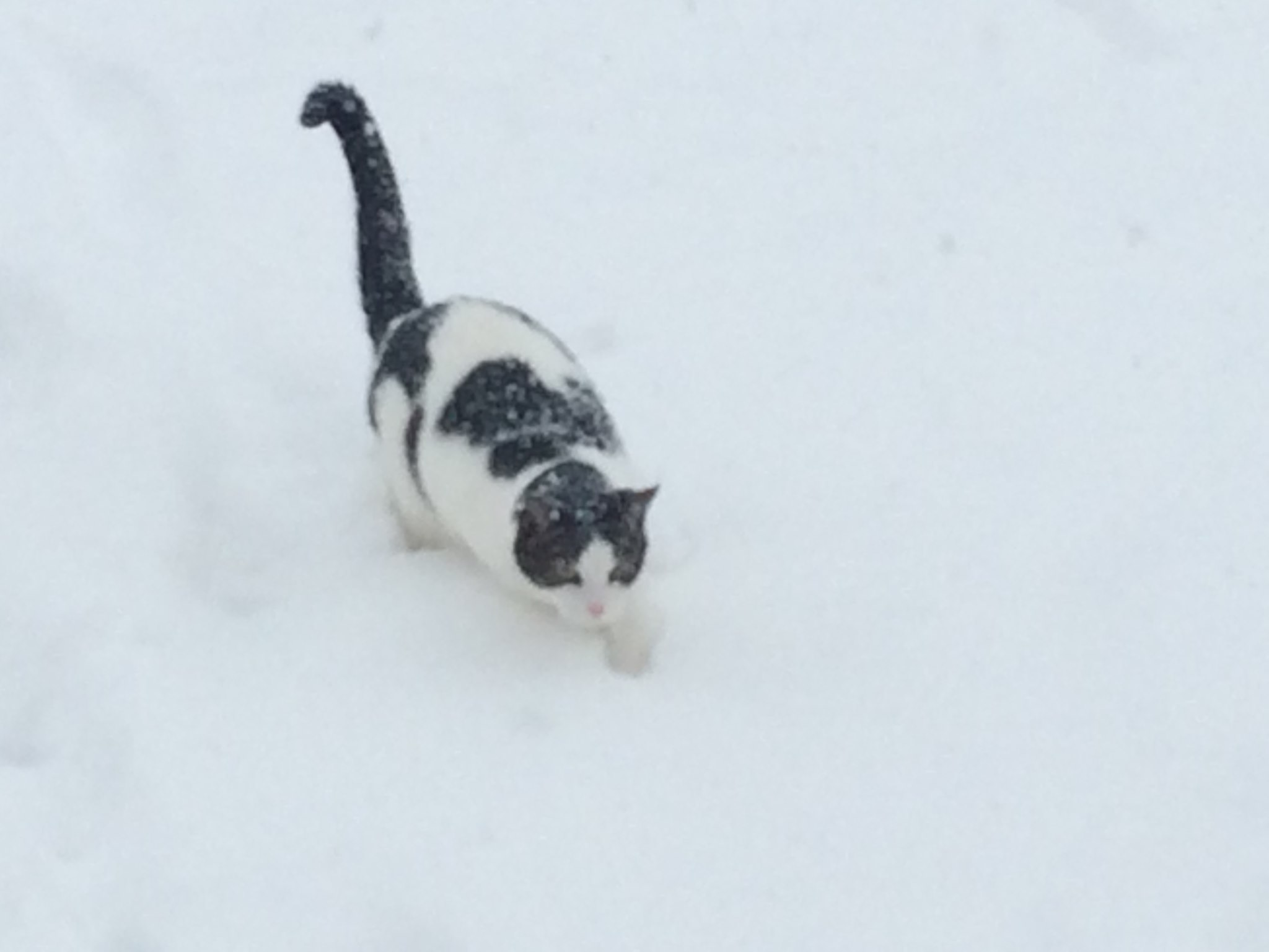 Cedric the cat in the snow