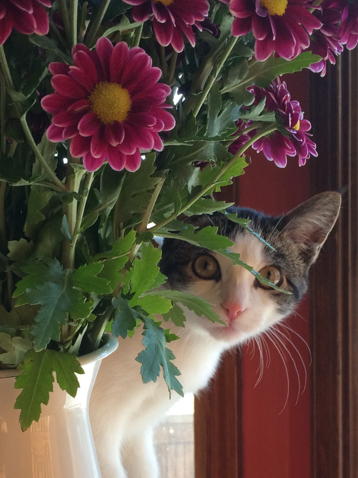 Cedric the cat with flowers