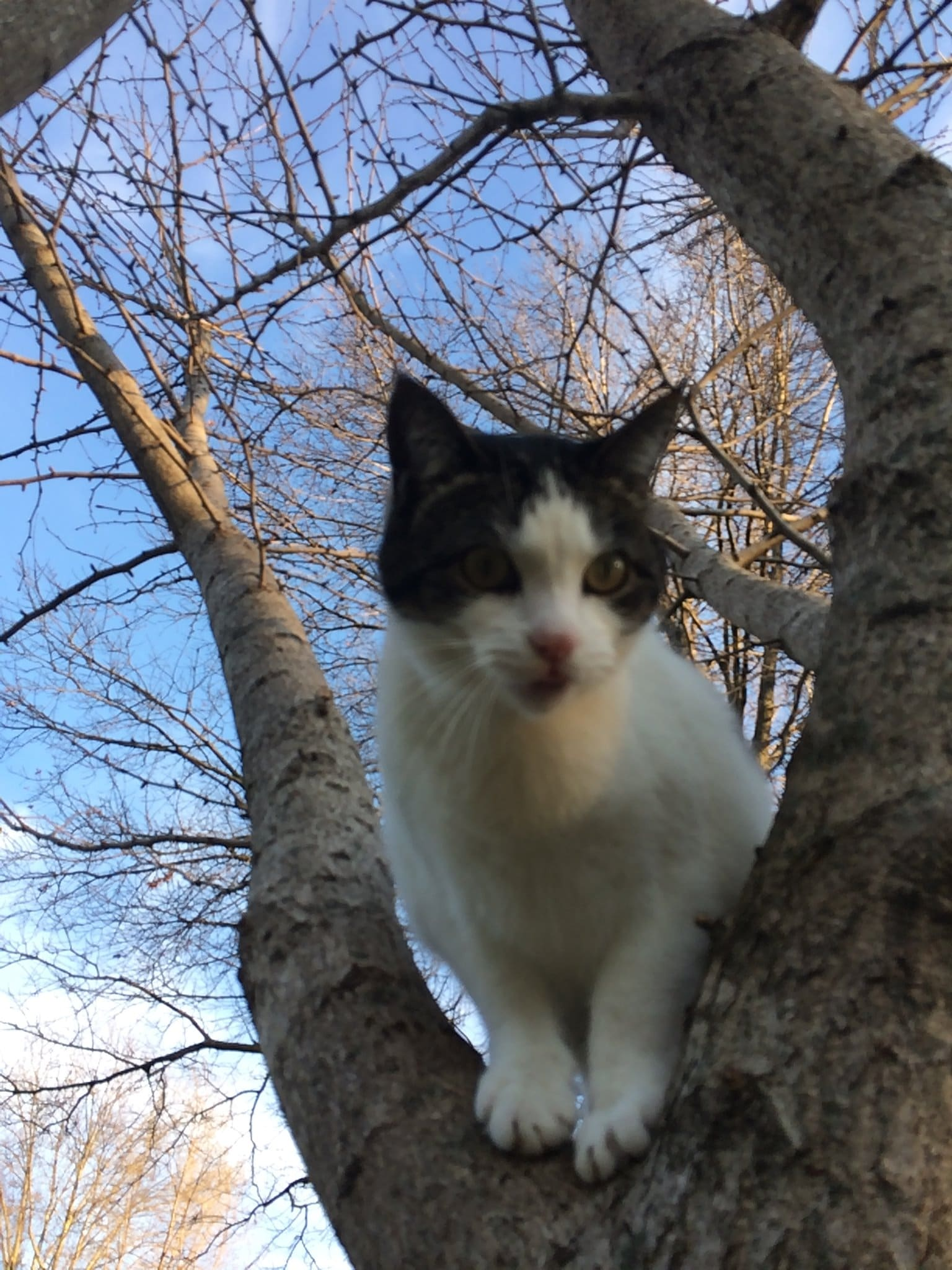 Cedric the cat in a tree